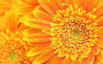 flor-de-color-amarillo