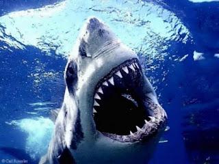 Shark Bite Dream Meaning