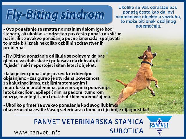 Fly biting ponašanje kod pasa