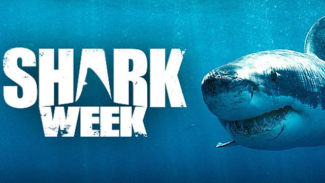Shark week toys for kids