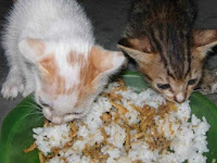 Terungkap! Inilah Pesan di Balik Kucing Mendekati Kita Saat Makan