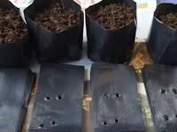 Polybag Sebagai Solusi Terbaik Untuk Pembibitan Di Lahan Sempit