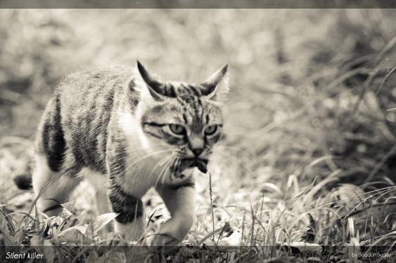 kissan kulttuurinen asema: kissa saduissa: sadistinen saalistaja?