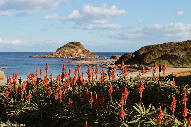Japanese Fashion Blogger,Mizuho K,爪木崎 アロエの花と海岸