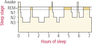 The architecture of sleep and the