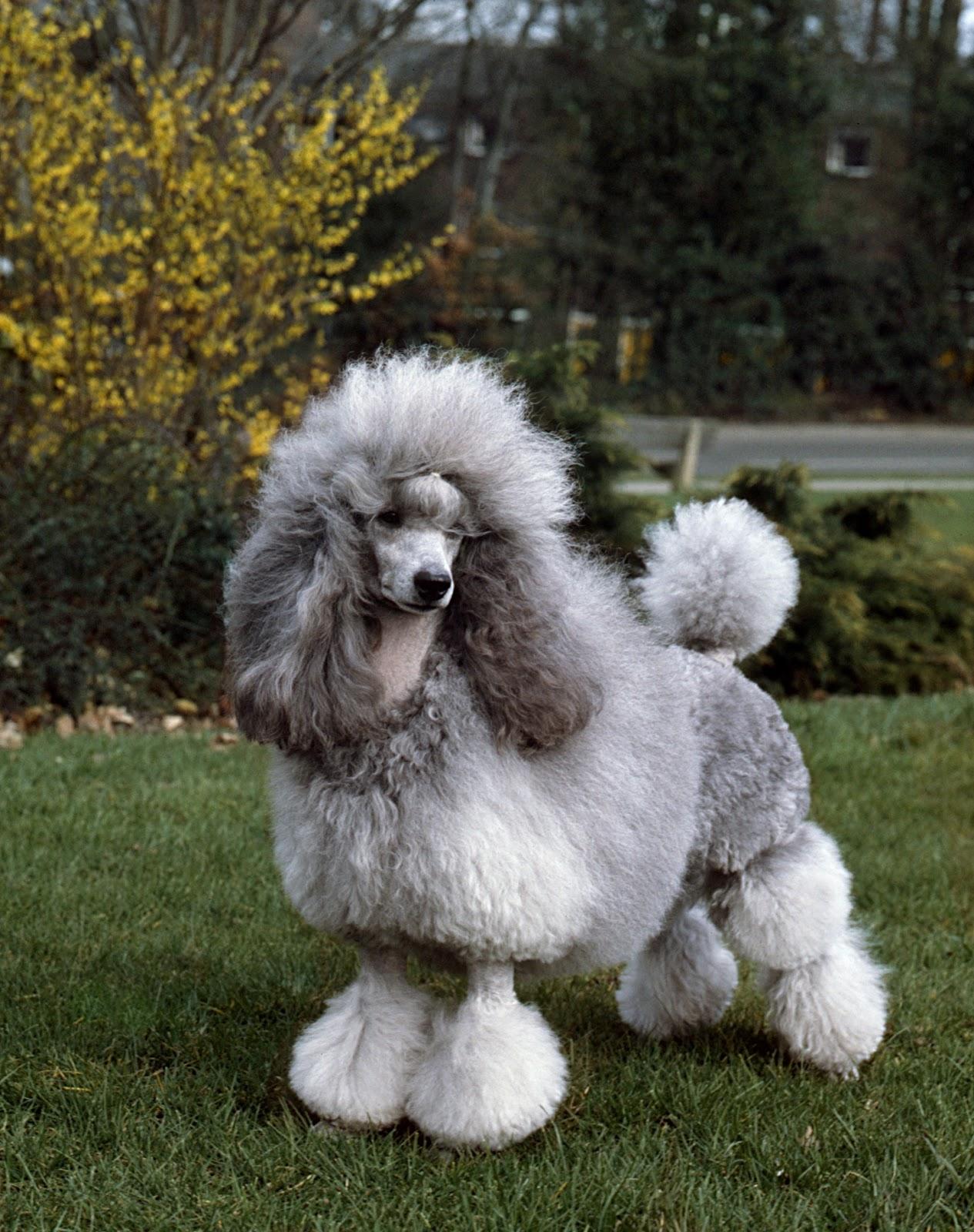 7 Best Medium Dog Breeds For Family Pet