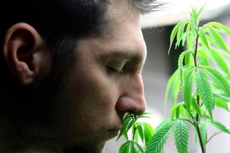 الجهوية24 - ترويج الماريخوانا ينعش السياحة في كاليفورنيا
