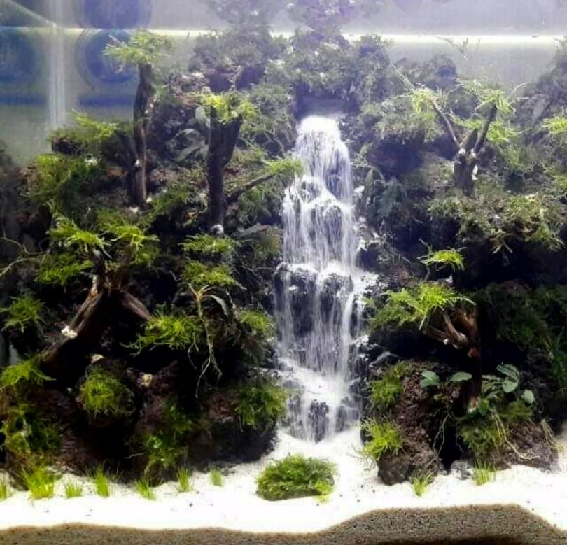 580+ Foto Design Aquascape Waterfall HD Gratid Untuk Di Contoh
