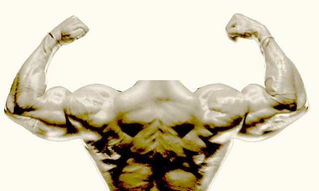 musculation-dorsaux