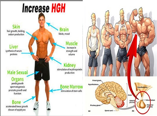 Top 4 Exercises To Boost Growth Hormone Naturally