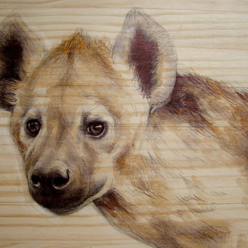 11-The-Hyena-Martina-Billi-Animal-Drawings-on-Recycled-Wooden-Planks-www-designstack-co