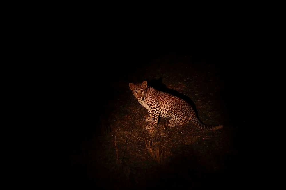 Leopard sighting in southern Rajasthan