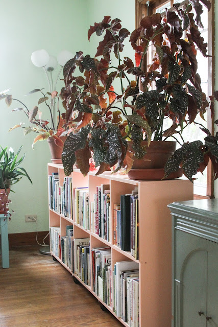 houseplants, begonias, home, Anne Butera, My Giant Strawberry
