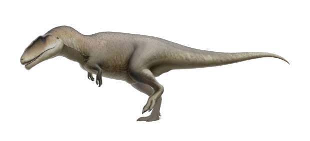 معلومات عن كركرودونتوصور Carcharodontosaurus