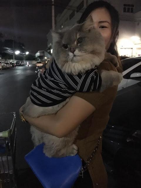 foto kucing lucu
