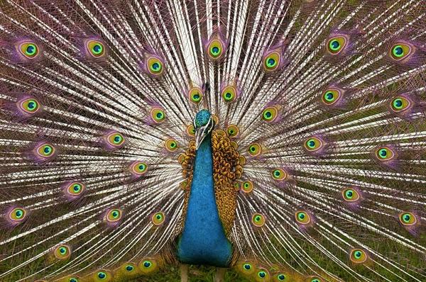 Beautiful Symmetry In Nature
