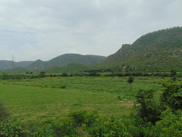 sariska to alwar