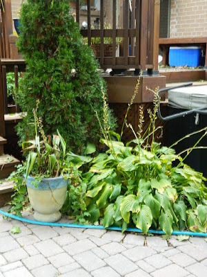 Toronto Fall Cleanup Before Don Mills Backyard by Paul Jung Gardening Services--a Toronto Gardening Services Company