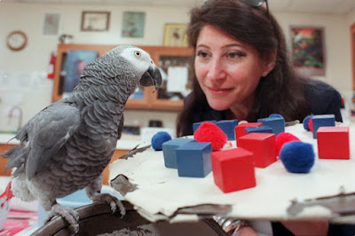 parrot fun facts animal lovers