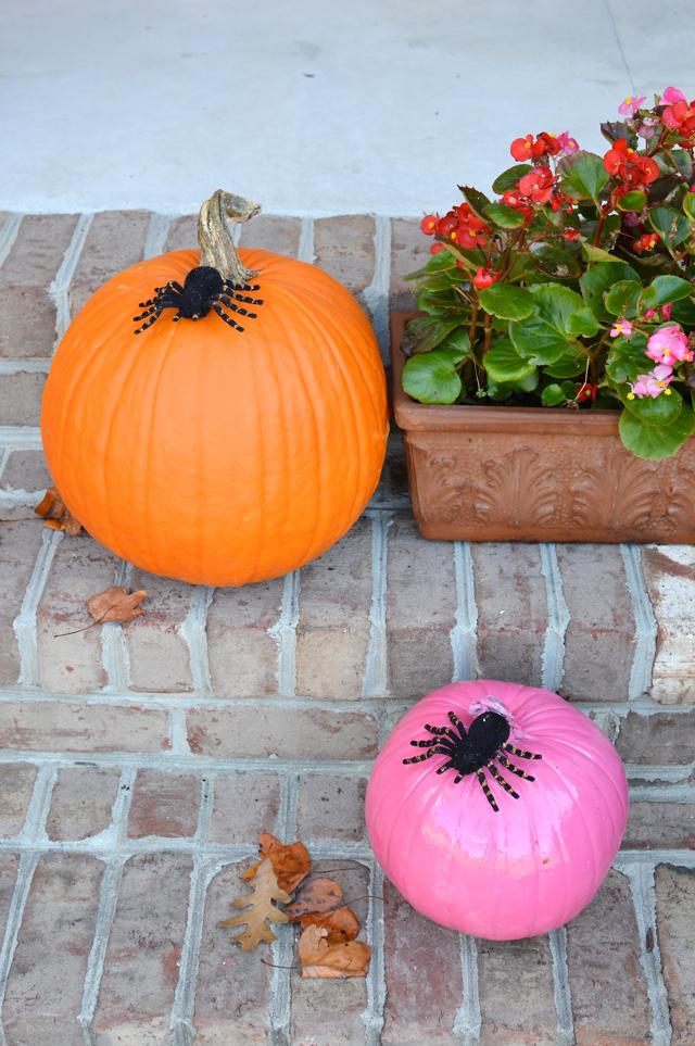 spiders on pumpkins