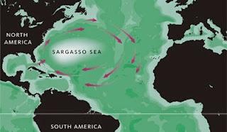 Resultado de imagem para Mar dos sargaços