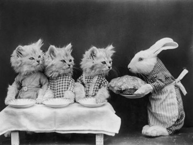 śmieszne-zdjęcia-kotów