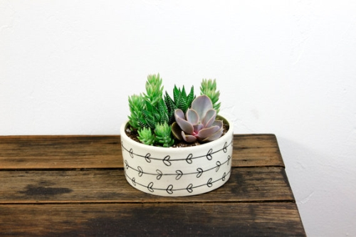 Cute plant