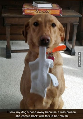 Funny Dog Humor : No more dog bones for you, my friend