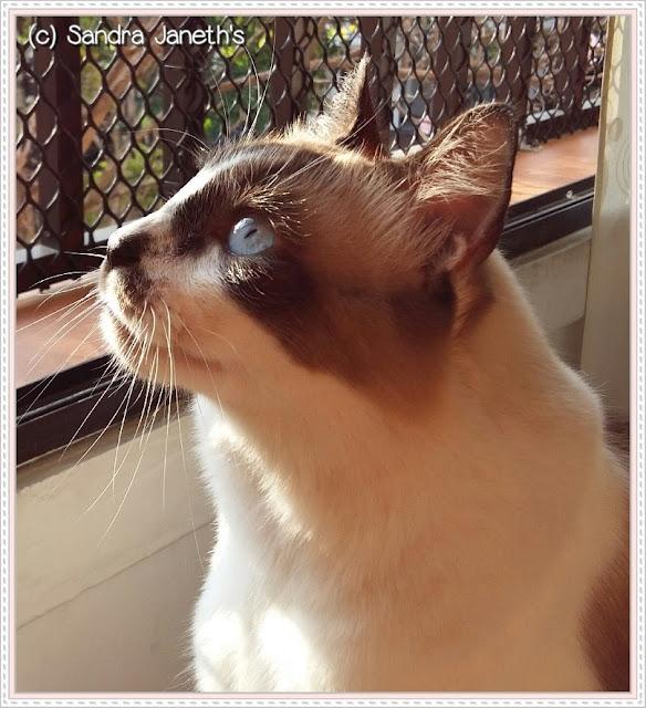 Gato COCO