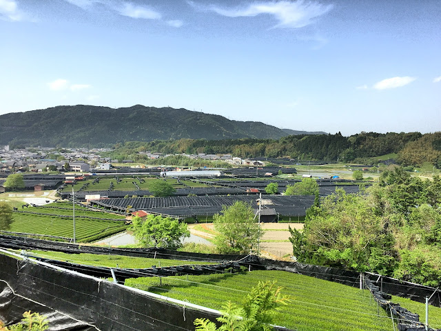 Uji in Kyoto