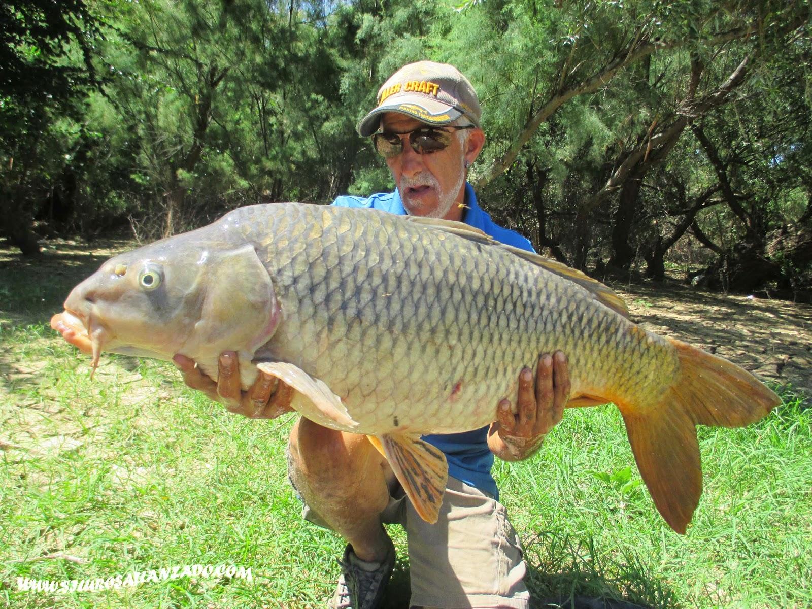 Pesca con gu a del siluro al lanzado y pellets con alberto for Telefono carpa logrono