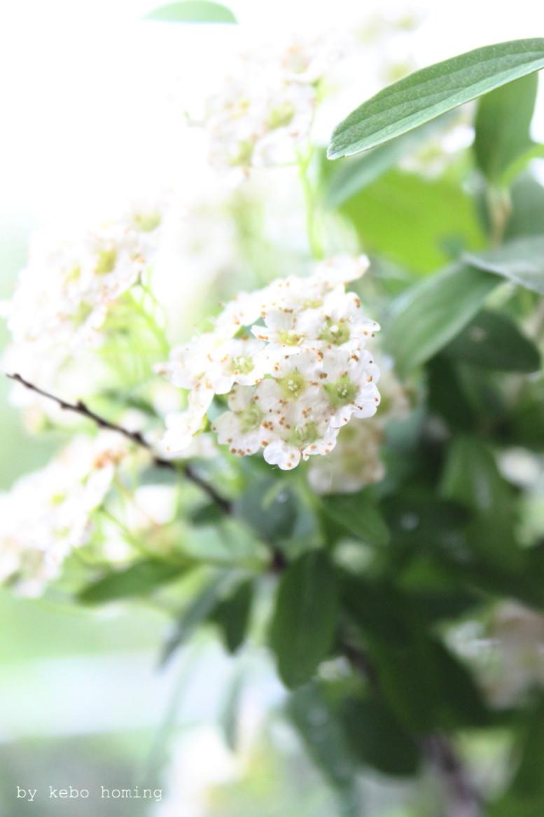 Blumen am Fensterbrett, friday flowerday, iPhone, Wegwerfgesellschaft, Lifestyleblog kebo homing
