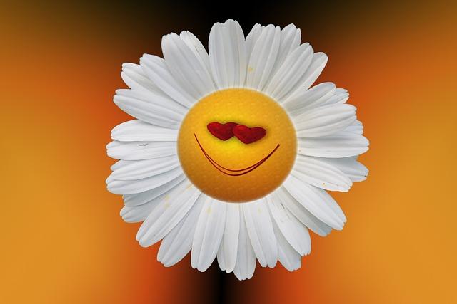 for, sorriso, margarida