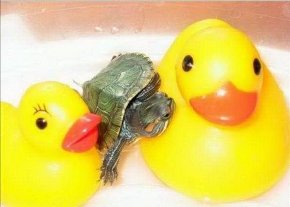 Little Turtles Cute | 100knot