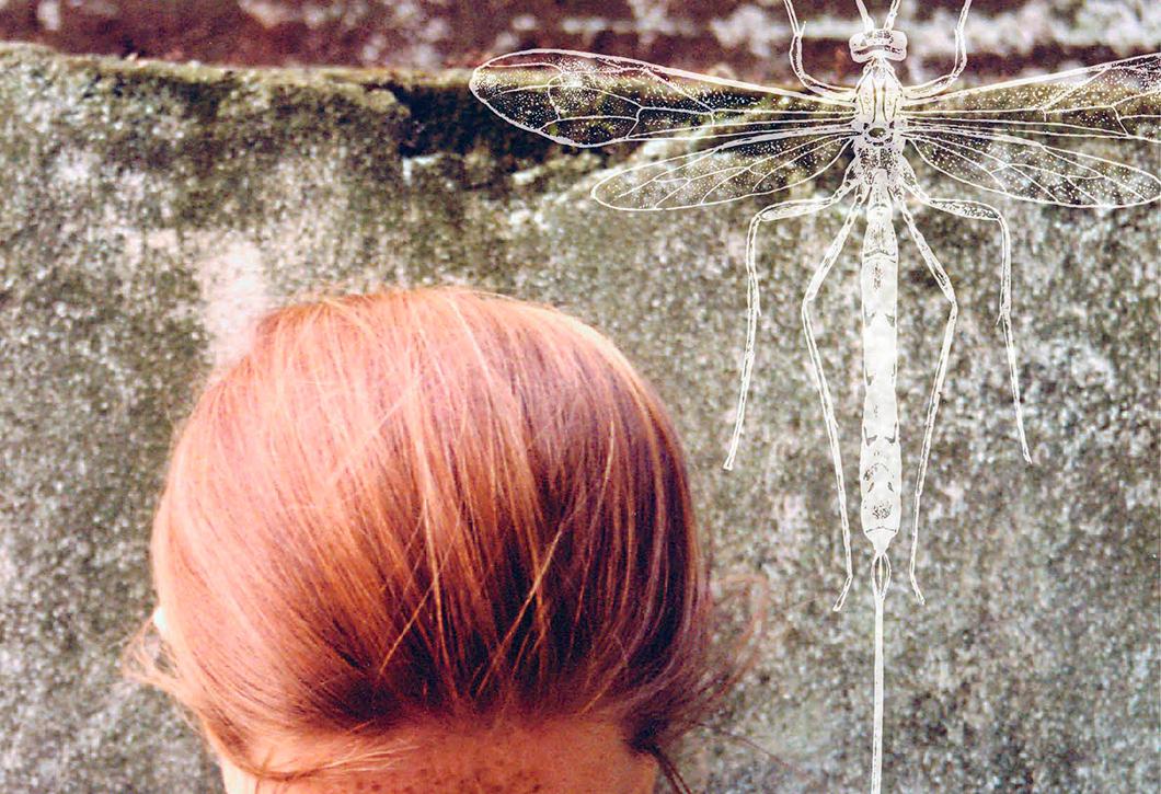 Resenha do livro: A Libélula dos seus Oito Anos, de Martin Page