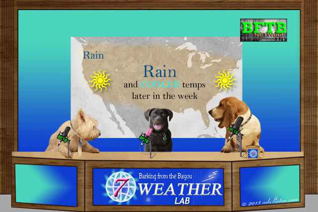 Weather news set with three dogs