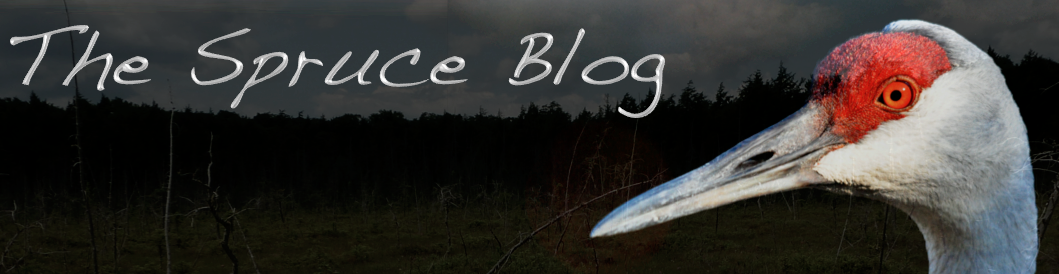 The Spruce Blog