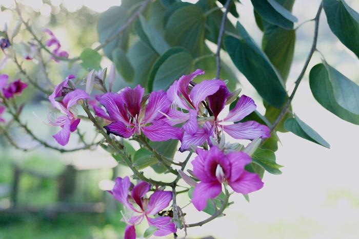 pink flowers in tree