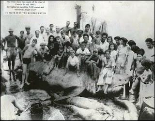 Monstruo de Cojimar, Cuba, 1945