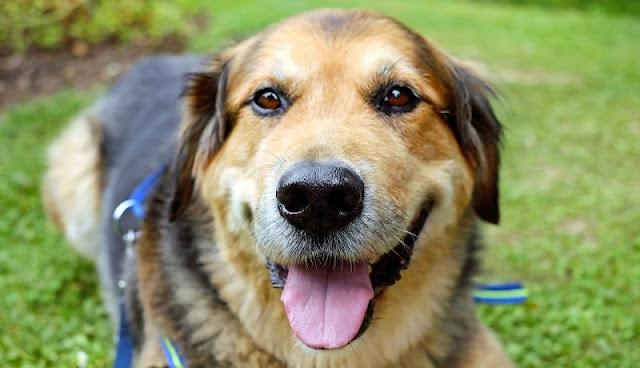 foto ekspresi anjing yang bahagia tampak muka
