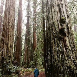 Me in the california redwoods, fountain of youth