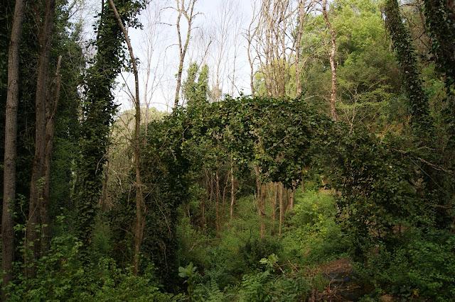 Verde y más verde en el Arroyo del Molino