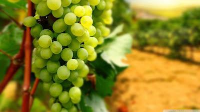 wallpaper buah anggur hijau