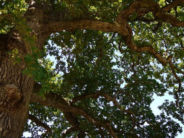 RIP le chêne, même les arbres meurent un jour...