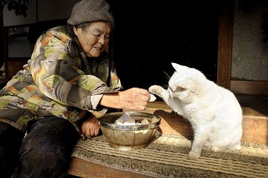 friendship cat grandmother