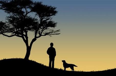 """Cette tres belle et poetique image montre la silhouette d'un homme et de son chien qui se tient pres de lui. L'homme semble contempler le ciel et l'horizon tandis que le chien est tourne dans la direction de son maitre. A cote des deux silhouettes, sur la gauche, se trouve celle d'un arbre. La scene prend place a la fin ou denut du jour, c'est la penombre, l'horizon se teinte legerement de jaune. On aurait tendance a croire qu'il s'agit du crepuscule a cause de la faible intensité lumineuse. Cette superbe image épuree acommpagne le trs beau nouveau poeme du Marginal Magnifique intitule """"Compagnons fugaces"""" dans lequel l'immense poete culte rend hommage au animaux domestiques, ces compagnons a quatre pattes qui partagent notre vie et qui disparaissent trop tot, laissant derriere eux un vide et une peine immense. L'auteur insiste sur le fait que les souvenirs sont bien peu de choses compares a la tristesse de les avoir perdus. Le poeme a aussi une portee metaphysique puisqu'il invite le lecteur a une reflexion sur la mort et le renvoie  a sa propre condition, lui rappelant qu'il n'est pas davantage que ces pauvres animaux, c'est-a-dire de la matiere. Ainsi Le Marginal Magnifique interroge sur le sens même de la vie et de ce qu'il y a apres. Magnifique poeme tres emouvant et riche de sens !"""