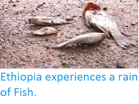 http://sciencythoughts.blogspot.com/2016/02/ethiopia-experiences-rain-of-fish.html