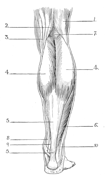 black leg diagram bent leg diagram #5