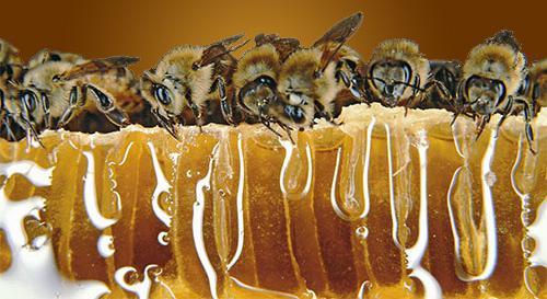 Πωλείται μελισσοκομικός εξοπλισμός στην Μεσσηνία