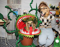 Little shop of horrors pet costumes